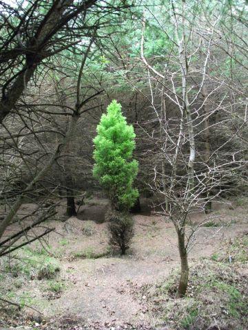 Olav's Wood