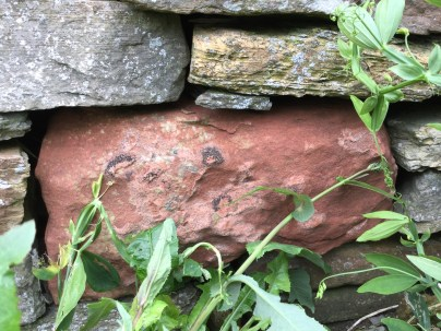 Dressed red sandstone that was once part of a high status building now found in walls about the village