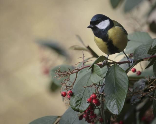 Bird n Berries