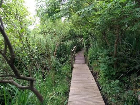 Olavs Wood 3