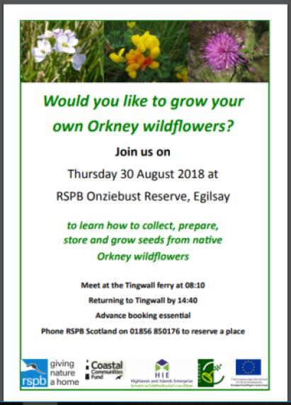 wild flower RSPB poster