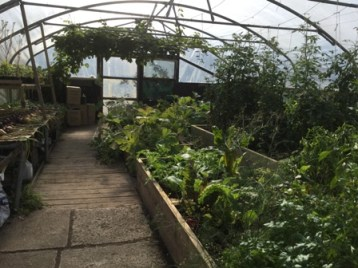 St Colms 11 Poly tunnel