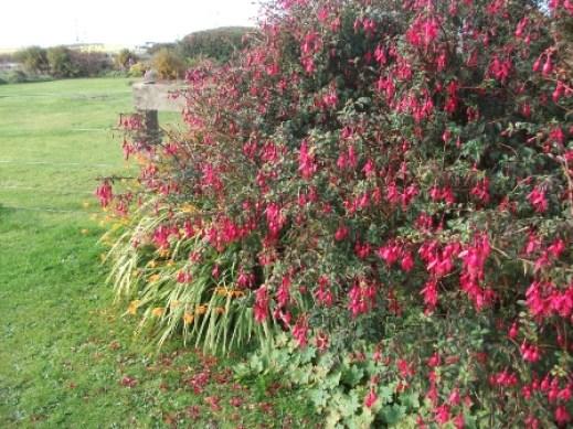 Autumn B Bell 1