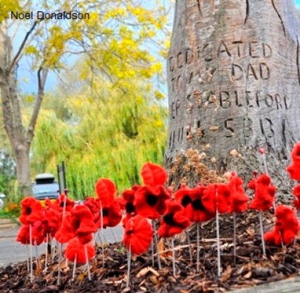 Poppies Linlithgow 4