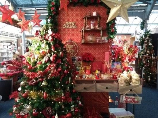 Christmas spotting garden centre