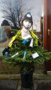 Christmas tree spotting 2