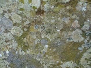 Brodgar graffiti stumpy stone 2 M Bell