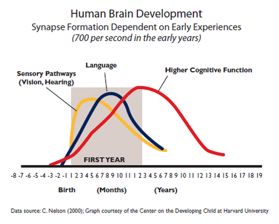 human-brain-development-synapse-formation-dependent-on-early-experiences30DFA913B1B36ABCE5628C7D