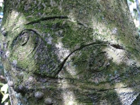 Tree bark Woodwick 3 M Bell