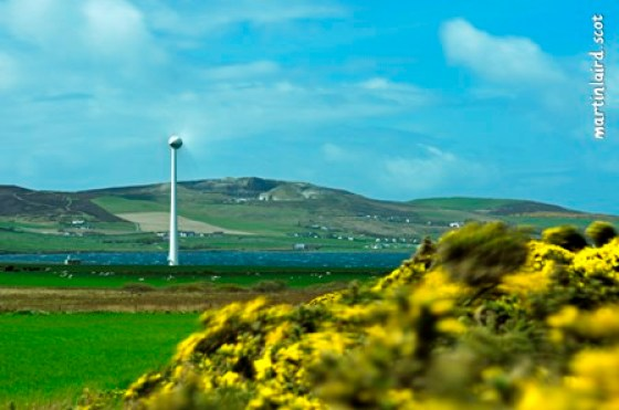 A turbine and gorse blowing in the perpetual wind