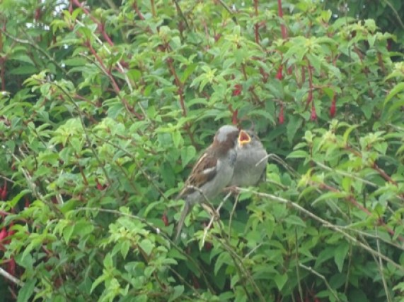 Birds feeding Mike Bell