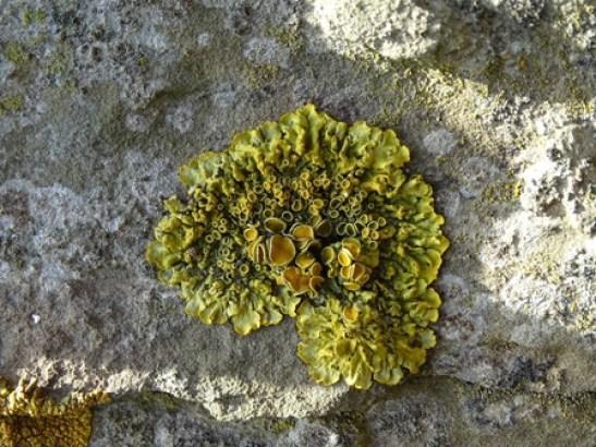 lichen Orphir beach Bell
