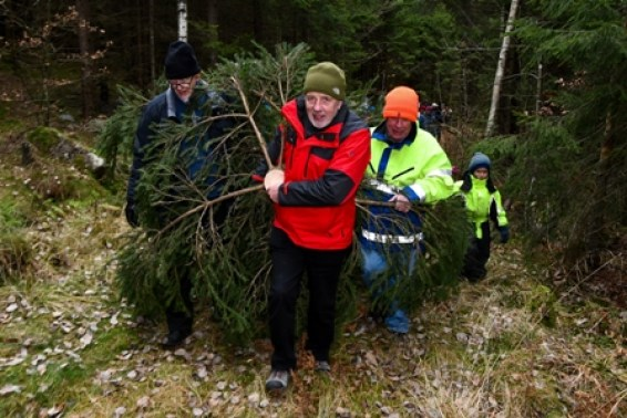 Harvey Johnston at Christmas tree cutting Norway 2019