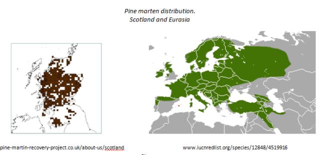 pine marten distribution