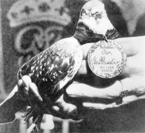 PDSA Dickin Medal recipient GI Joe
