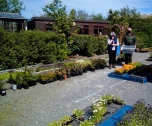 plant-sale-2.jpg Nick Morrison