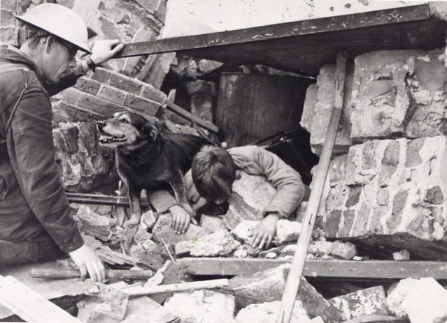 Rip Civil Defence rescue dog during the Blitz