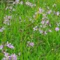 wild flower meadow  credit Bell