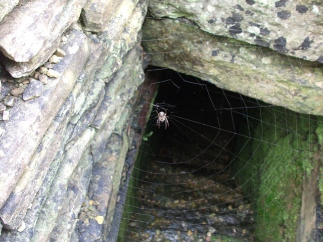 broch of Gurness spider in well credit Bell