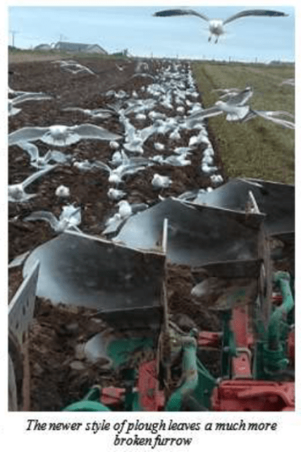 new ploughs Stronsay Limpet Ian Cooper