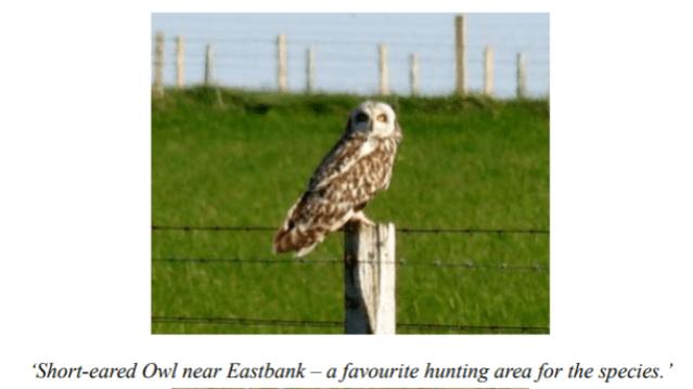 short eared owl Stronsay credit Ian Cooper