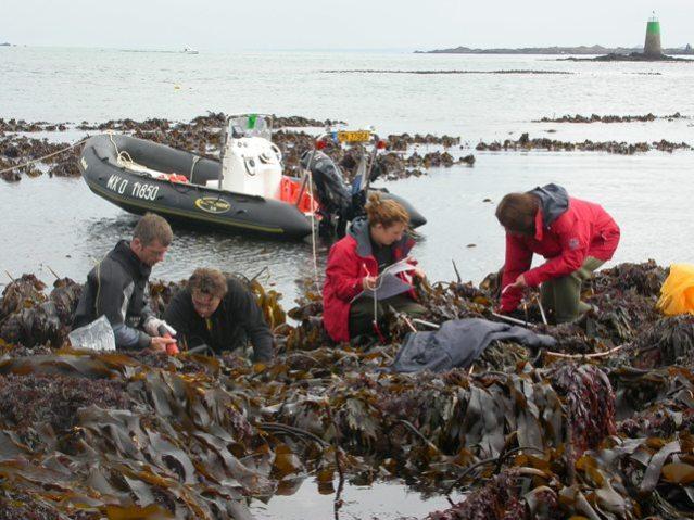 sampling kelp credit Christophe Destombe @Station Biologique de Roscoff, France.