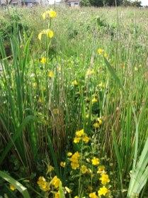 garden pond Bernie Bell