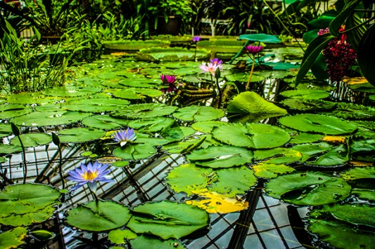 Golden Gate Park | Conservatory of Flowers