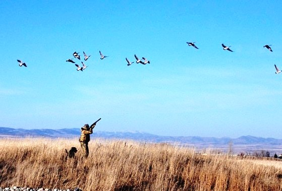 shooting_birds