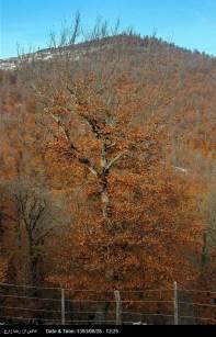 Hamedan, Iran - Autumn in Hamedan 22