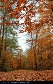 Hamedan, Iran - Autumn in Hamedan 27