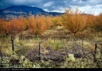 Kermanshah, Iran - Kermanshah, Kambadn in Autumn 04