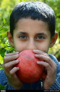 Kermanshah, Iran - Paveh, Pomegranate Harvest 2014 00