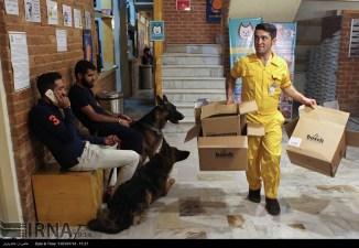Tehran, Iran - Veterinary Hospital in Tehran 05