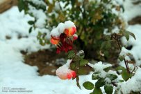 Zanjan, Iran - Zanjan's Autumn Snowfall 01