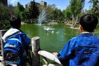 Alborz, Iran - Karaj, Chamran's Park Flower Garden 5