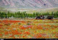 East Azerbaijan, Iran - Arasbaran region 25