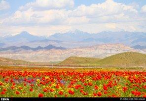 East Azerbaijan, Iran - Arasbaran region 37