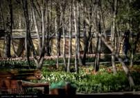 Tehran, Iran - Bagh-e Irani Park 14