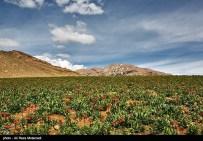 Iran Chahar Mahal Province -Spring in Koohrang 2