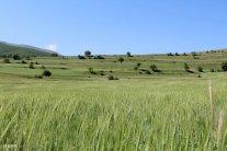 East Azerbaijan, Iran - Arasbaran 105
