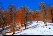 Gilan, Iran – Autumn - Snow in Talesh 04
