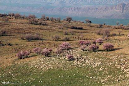 First spring signs in Rumeshgan - Lorestan Province, Iran - (Photo credit: Behrouz Bazvand / Mehr News Agency)