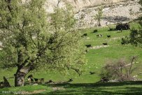 Chaharmahal and Bakhtiari, Iran - Ardal County - Beautiful nature in Landi Village 12