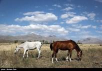 Ardabil, Iran - Spring days across Ardabil Province 05