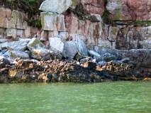 Puffin Island Cruise