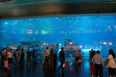 The aquarium at Dubai mall, in the middle of the shopping centre.