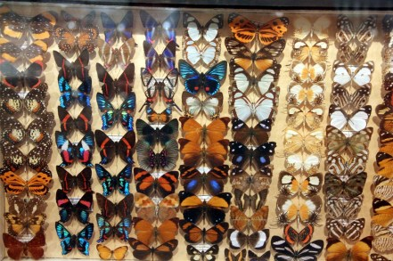 Just a small sample of the Insectarium