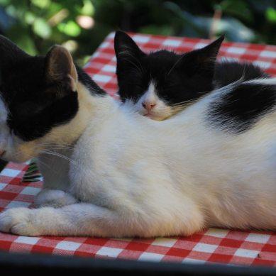 Ever present cats