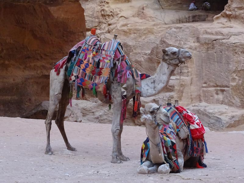 Petra - there were camels & donkeys available to ride (we didn't!)